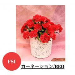 母の日にお花を贈りましょう
